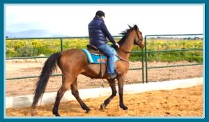 incentive aziendali sicila juniorland equitazione