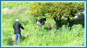 incentive aziendali sicila juniorland natura
